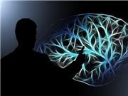 Cấy chip vào não để cải thiện trí nhớ