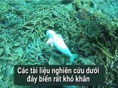 Cá robot độc nhất giúp khám phá đại dương