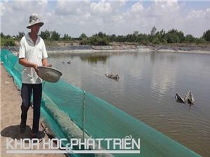 Tăng thu nhập nhờ nuôi cua trên ruộng muối