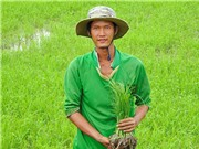Khởi nghiệp bằng cánh đồng lúa sạch từ tâm
