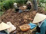 Nhận biết sản phẩm nông nghiệp hữu cơ đáng tin cậy