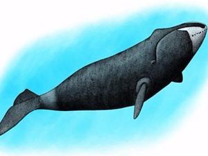 Loài cá voi thích hát trong bóng tối
