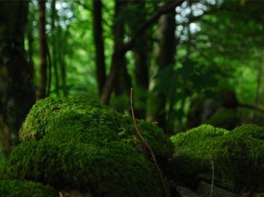 Tìm ra loại rêu khử độc thạch tín trong nước