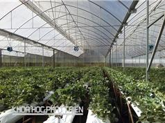 4 tiêu chí xác định doanh nghiệp nông nghiệp ứng dụng công nghệ cao