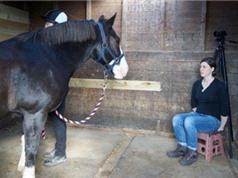 Ngựa ghi nhớ và điều chỉnh hành vi theo biểu cảm của người