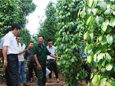 Đổi mới khoa học công nghệ trong nông nghiệp: Những điều đã nói nhiều lần