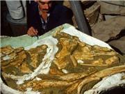 Phát hiện loài cá voi cổ đại mới ở New Zealand