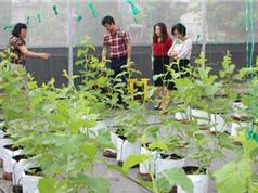 Vĩnh Phúc: Tạo ra giống rau, quả chất lượng cao nhờ đột phá về công nghệ