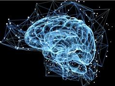Con người tự tạo ra tế bào não mới suốt đời