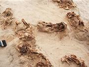 Nghi lễ hiến tế trẻ em trong ngôi mộ cổ ở Peru