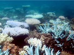 Tạo xương người từ tế bào gốc và… san hô