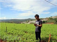 Nông dân trẻ làm vườn từ xa bằng... điện thoại thông minh