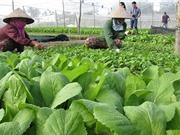 Phát triển phân bón hữu cơ để có nền nông nghiệp bền vững