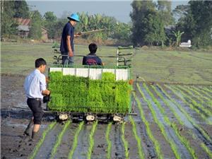 Lạng Sơn: Ứng dụng công nghệ mạ khay, máy cấy