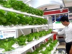 Techmart trồng trọt, bảo quản và chế biến rau, củ, quả: Chú trọng các giải pháp trọn gói