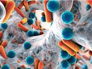Loại gene nhờn kháng sinh nguy hiểm đang lan khắp thế giới