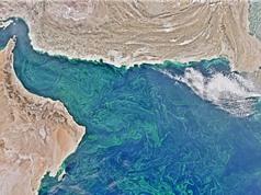 """Phát hiện """"vùng biển chết"""" lớn nhất thế giới ở Vịnh Oman"""