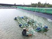 Tiết kiệm năng lượng trong nuôi trồng thủy sản