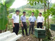 Sơn La: Xây dựng mô hình nhân nuôi ong mật ở huyện Sốp Cộp