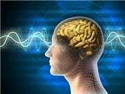 Não làm việc như thế nào trong khi ngủ?