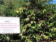 Khánh Hòa: Ứng dụng quy trình thâm canh cây cà phê kết hợp hệ thống tưới tiết kiệm phù hợp với điều kiện canh tác huyện Khánh Sơn