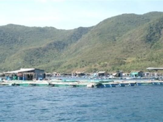 Khánh Hòa: Nghiên cứu xác định các yếu tố không bền vững của nghề nuôi tôm hùm trên biển tại huyện Vạn Ninh và đề xuất các giải pháp khắc phục