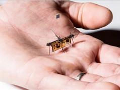 RoboFLy: Robot ruồi siêu nhỏ lấy năng lượng từ laser