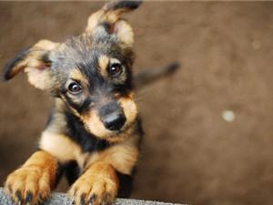 Chó có duy lý hơn người?