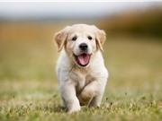 Cún con dễ thương nhất khi nào?
