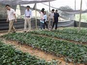 Thái Nguyên: Kiểm tra tiến độ thực hiện dự án Bảo tồn và phát triển giống chè trung du