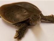Tiết lộ cấu trúc bộ gien của khủng long từ so sánh giữa chim-rùa