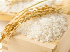 Nồng độ CO2 tăng cao khiến gạo mất vitamin và dưỡng chất
