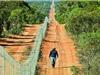 Australia xây hàng rào dài nhất thế giới để ngăn mèo