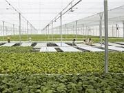 Tưới tiết kiệm: Nâng cao giá trị nông sản