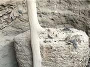Xác ướp nghìn năm bọc trong kén vải ở Peru
