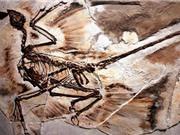 Phát hiện gàu trong hóa thạch khủng long 125 triệu năm