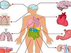[Infographic] Khả năng tái tạo của các bộ phận trong cơ thể người