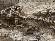 Phát hiện hóa thạch động vật có niên đại 42 triệu năm ở Brazil
