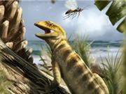 Hóa thạch thằn lằn lâu đời nhất thế giới niên đại 240 triệu năm