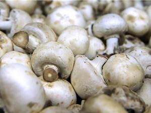 Nấm là loại thực phẩm có khả năng chống lão hóa