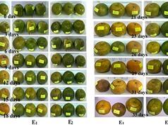 Bảo quản hoa quả bằng chế phẩm sinh học từ nano bạc và bột sắn