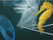 Liên Hợp Quốc kêu gọi giảm thiểu rác thải nhựa trong Ngày môi trường thế giới