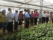Đà Nẵng: Ứng dụng công nghệ cao trong sản xuất nông nghiệp