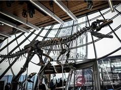 Bộ xương khủng long 150 triệu năm tuổi được bán đấu giá hơn 2 triệu USD