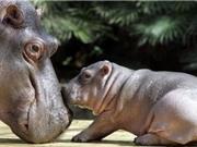 Có bao nhiêu con vật được sinh ra trên toàn thế giới mỗi ngày?