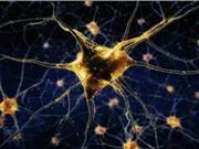Biến tế bào máu thành neuron thần kinh