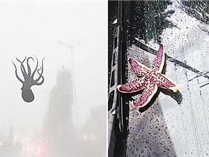 Cơn mưa động vật kỳ lạ tại Trung Quốc
