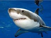 Mỹ điều tra trách nhiệm hình sự vụ cá mập trắng chết