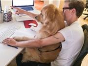 """Hãy """"rủ"""" chó đến công sở"""