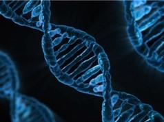 Lập trình tự gen giúp các nhà khoa học khai thác đất để sản xuất kháng sinh